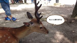 鹿のお出迎え