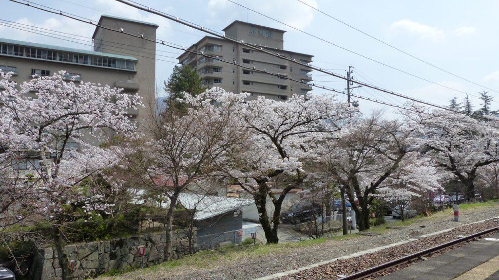 下呂温泉駅の桜